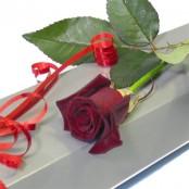Red rose in a black rose box
